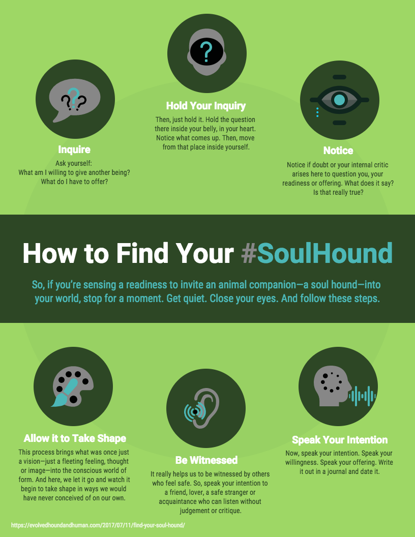 How-to-find-your-soul-hound-Infographic
